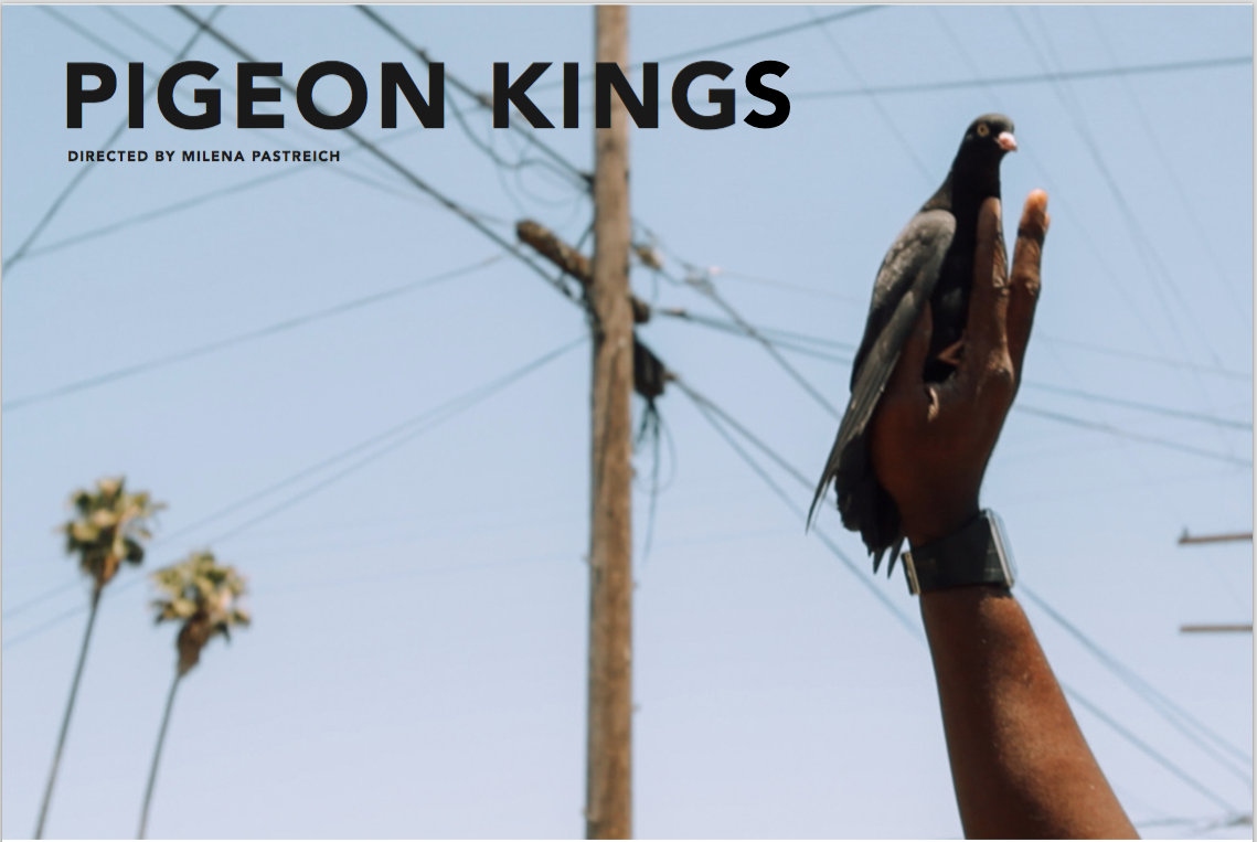 Pigeon Kings Image